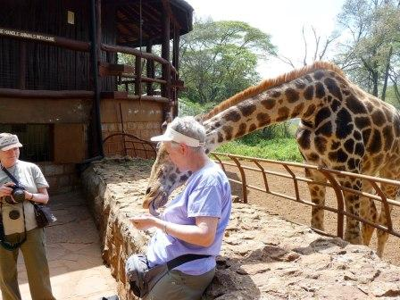 A giraffe lovers delight
